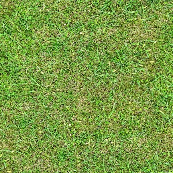 138_green grass texture-seamless.jpg